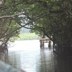 MANGROVE CREEK AT BARATANG
